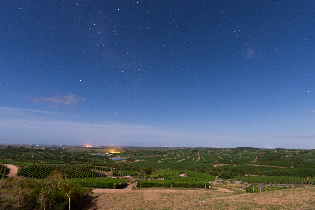 The vineyards of Bodega Garzón extend into the distance illuminated by the moon.