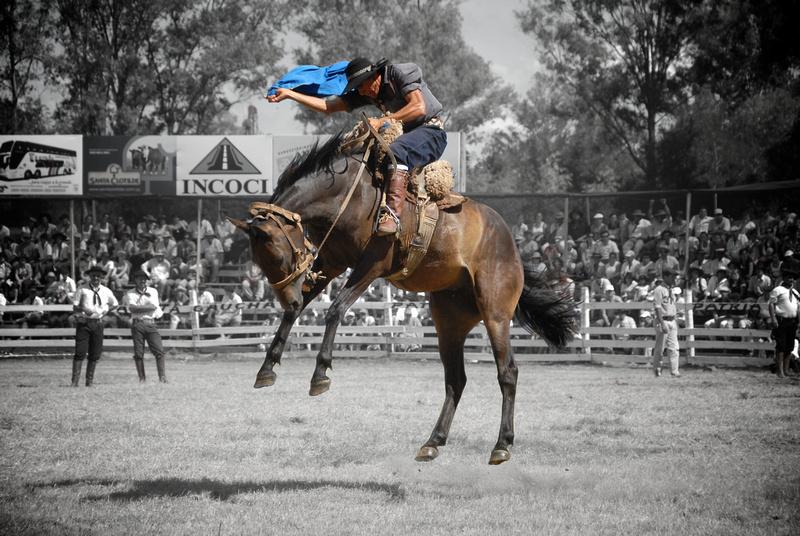 A gaucho riding a wild horse at the doma (rodeo) of La Patria Gaucha.