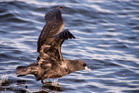 In search of pelagic birds 2016